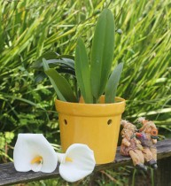 Vaso Furado Para Orquídeas Em Cerâmica Amarelo